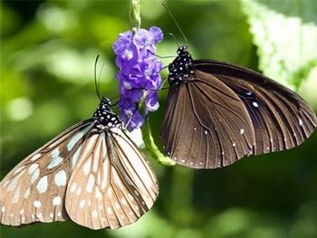Описание бабочки у лучшего натуралиста