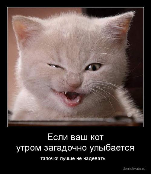 Смешные картинки о котах и собаках