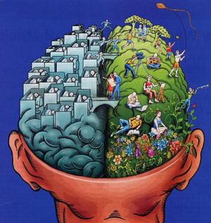 Асимметрия мозга. Правое и левое полушария